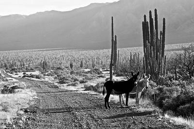 Baja 1000 Course, Mexico
