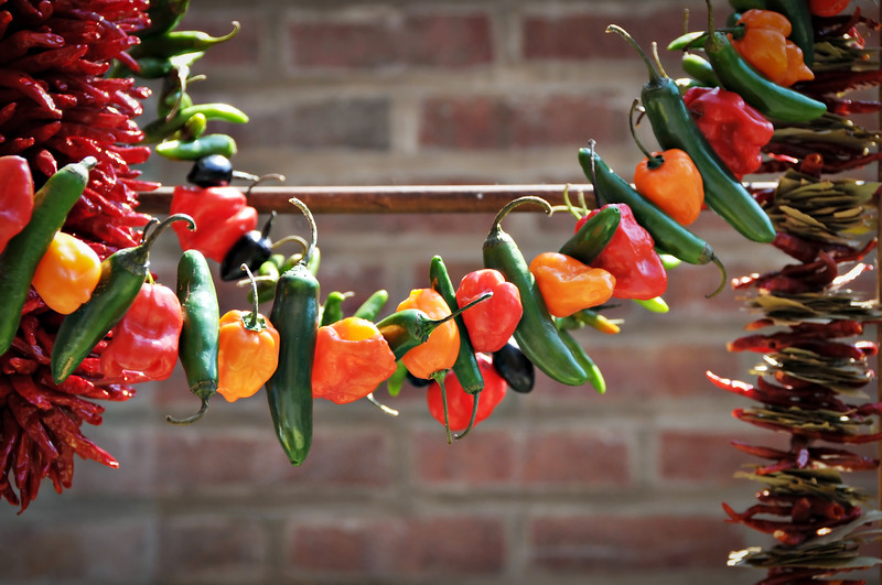 String of Colorful Hot Peppers, Shallow DOF