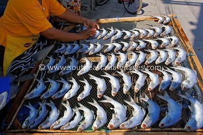 Fish Drying in Sun