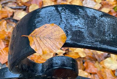 Leaf on Bench Railing in Rain, Portland, 2020