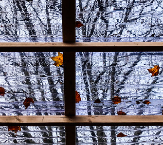 Trees Through Plastic Roof in Rain, Portland, 2020