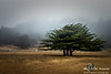 Albion Trees