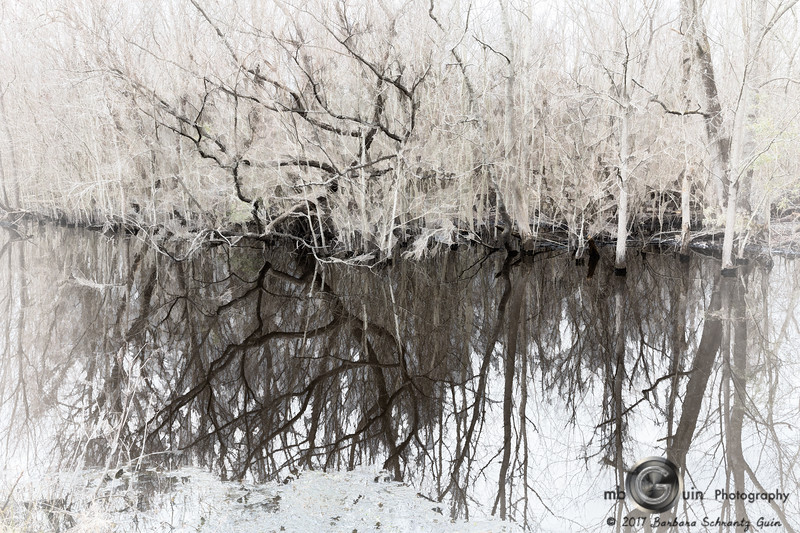 Winter Reflections