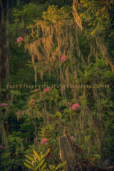 Natures-Paintings-VII-copy