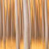 """""""Autumn Impressions"""""""