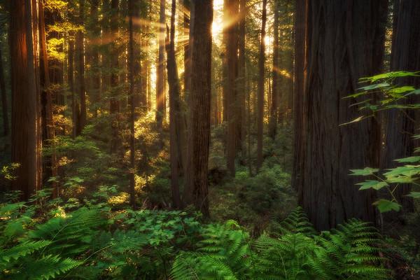 """Forest Radiation"""