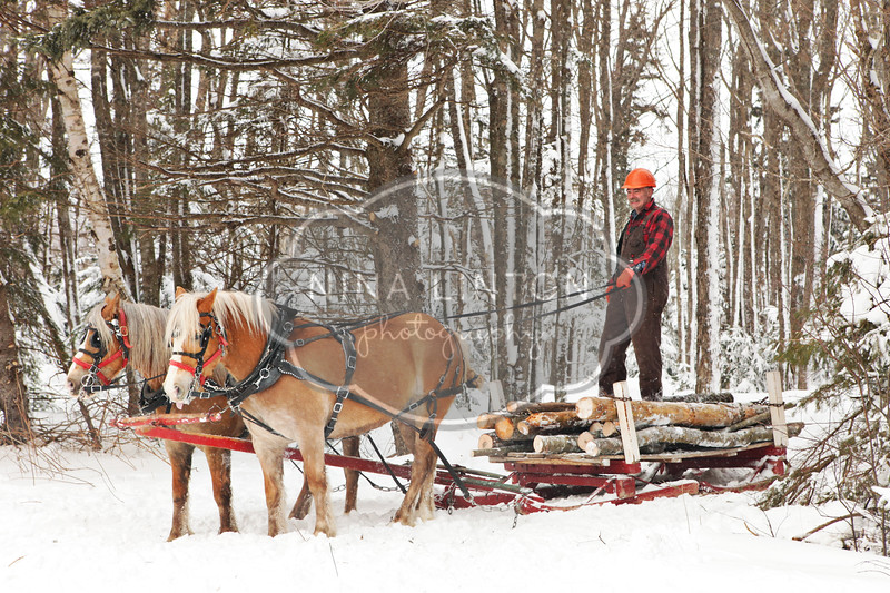 PEI Winter Woodlot Tour 2011