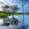 Reflections on the Rio Juma in the Amazon