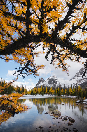 """LARCH ARCH"""