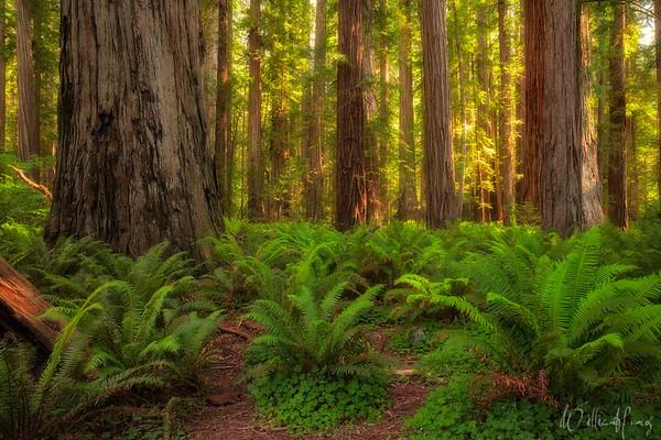 The Enlightened Grove