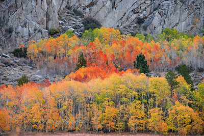aspens color show