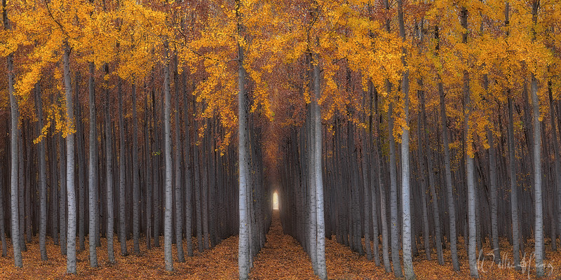 Mind Over Matter Oregon   Perfectly aligned rows of trees create labyrinth hallways and a mind-blowing experience.