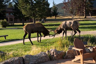 Elk III: More Elk