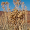 Desert plant in the wind.