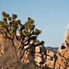 Joshua Tree landscapes.