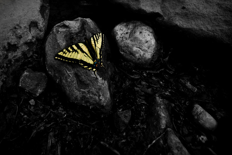 Quick shot of a butterfly. They are the most colorful creatures in an otherwise colorless desert.