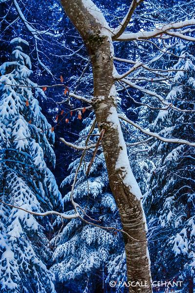 Trees in winter 1