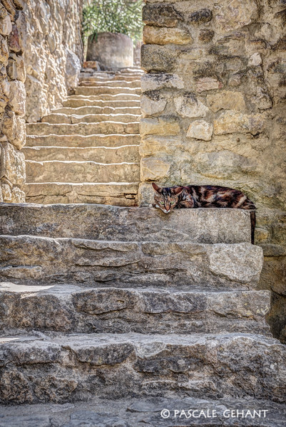 Cat nap on stairs