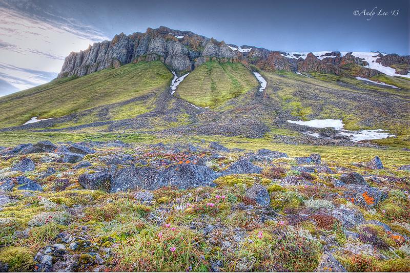 Cape Flora, Northbrook Island, Franz Josef Land<br /> GPS 79,56.367N,  50,2.3543E
