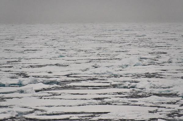 Ice density increases around 83° north of Rudolf Island
