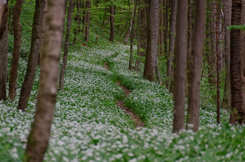 Mayerling Wienerwald forests