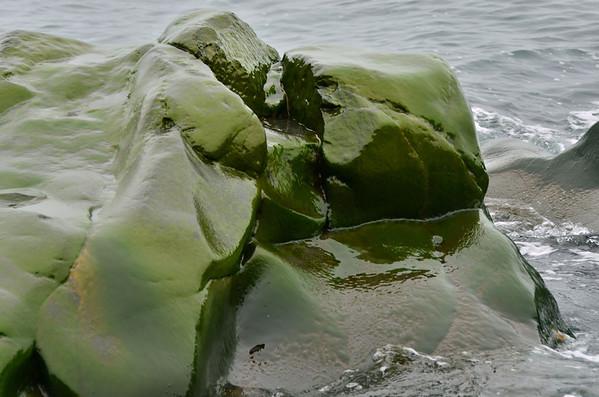 Alge rock, Cape Flora