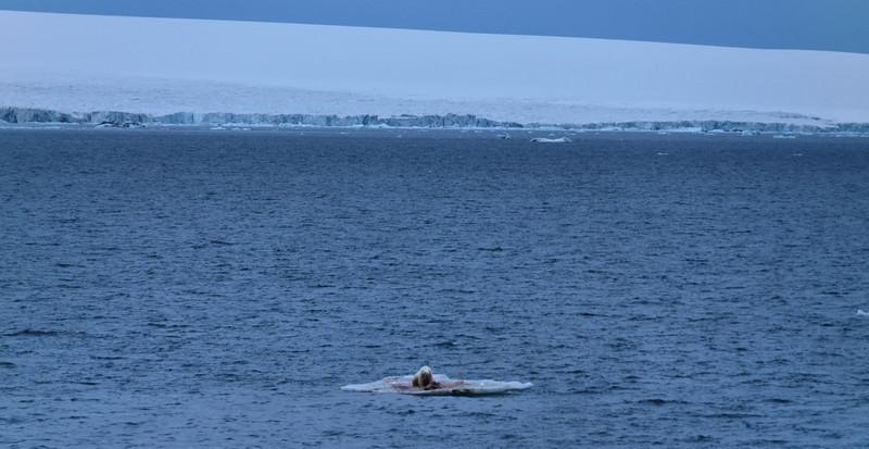 Arctic Life