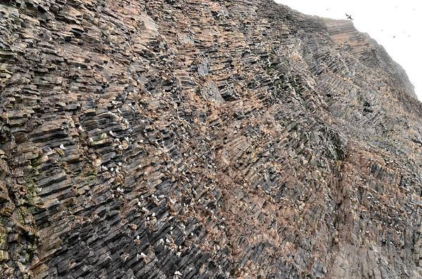 Bird colony, Rubini Rock basalt column pattern