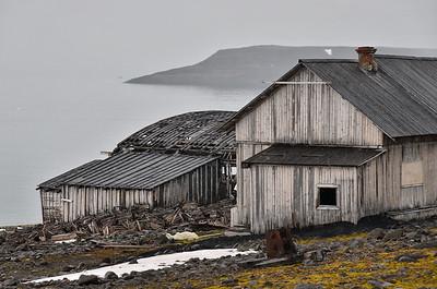 Dead Polar Bear, Sedov Station, Tichaya Bay, Hooker Island