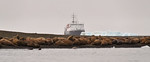 Walruss colony, Appolonva Bay, Ortelius