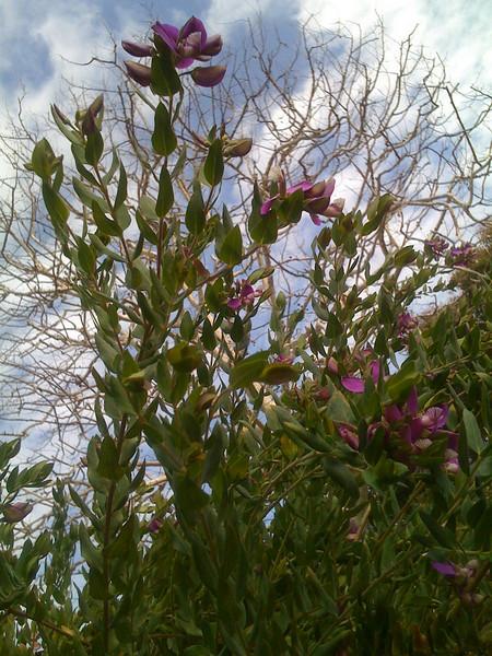 Blossoming flower,  barren tree