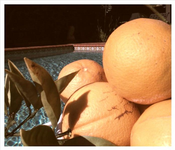 Retro oranges
