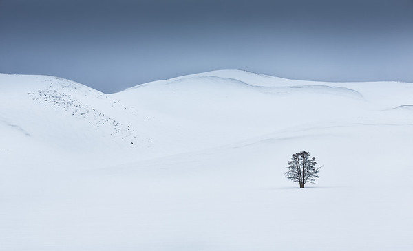 Lone tree in winter,  Hayden Valley, Yellowstone NP