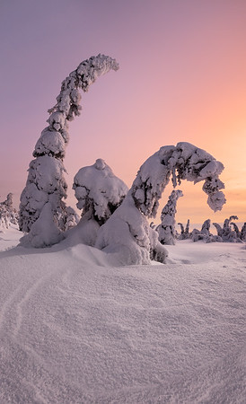 Frozen forest, arctic Finland