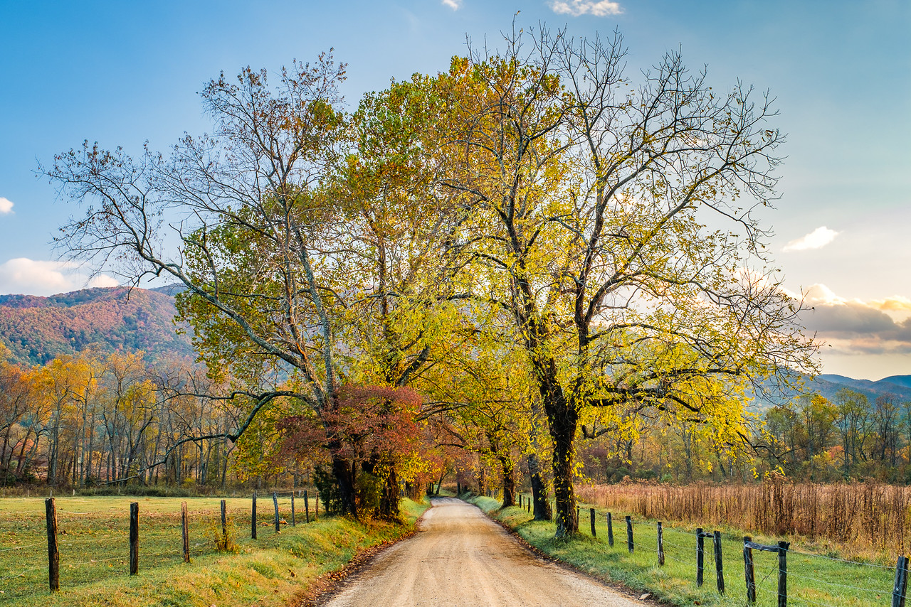 Trees Along Sparks Lane in Cades Cove in Late Afternoon Light