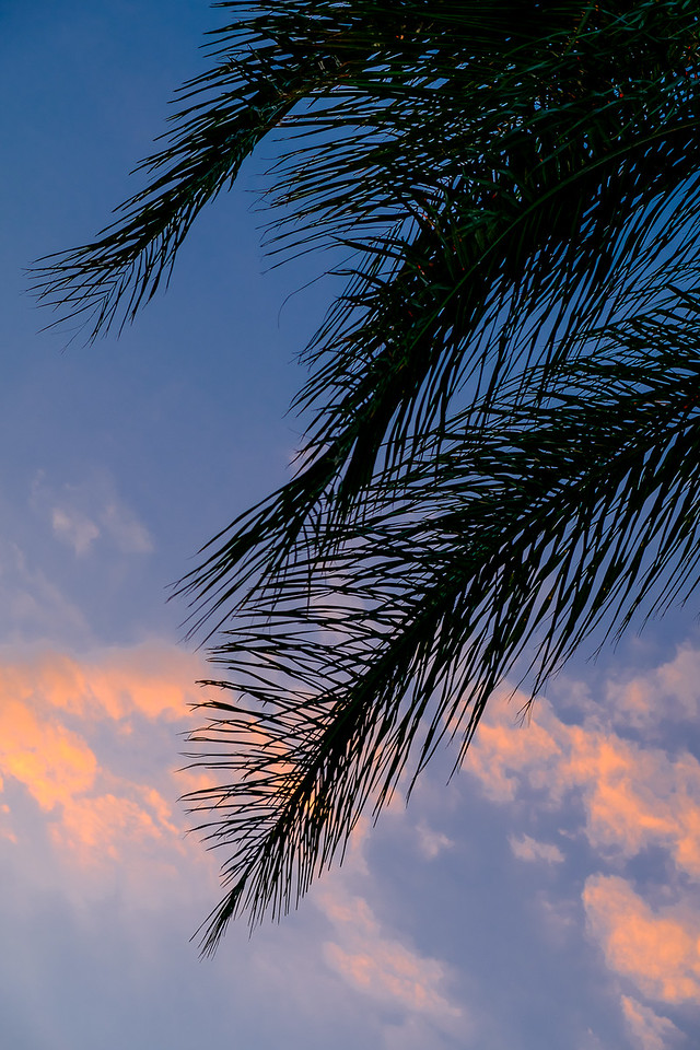 Palm Fronds At Sunset