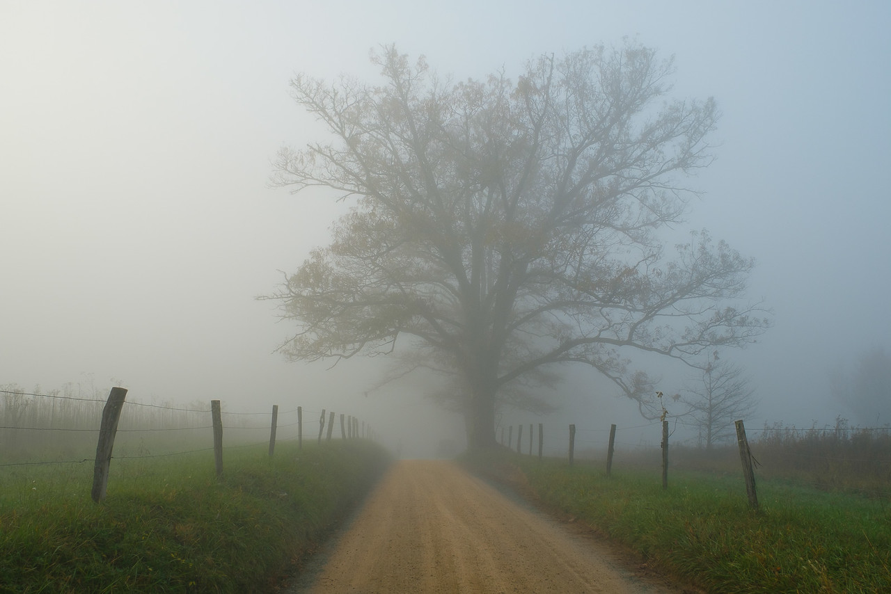 Autumn Trees on Sparks Lane in Cades Cove on a Foggy  Early Morning