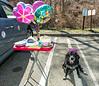 Megan's surprise 11th birthday party - April 12, 2015