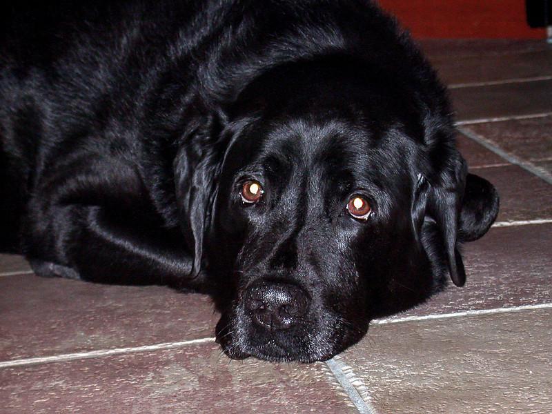 On kitchen floor - Sept. 2001