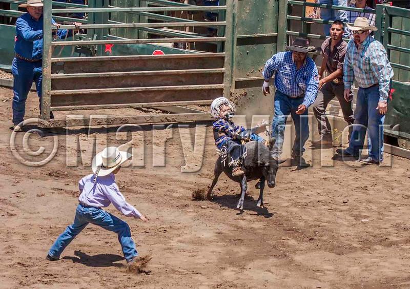 Future Bull Rider