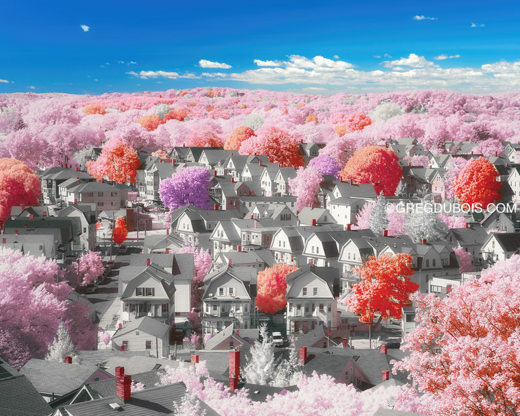 Colonial New England Town with Pink Trees in Boston Suburbs