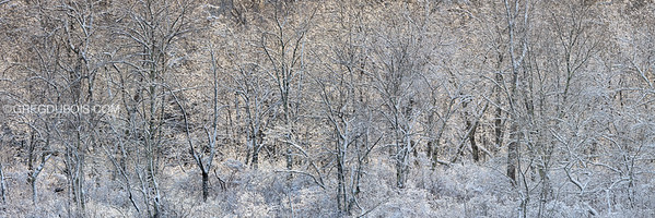 Ice and Snow Encrusted Trees with Backlight at Stevens Pond in Boxford Massachusetts