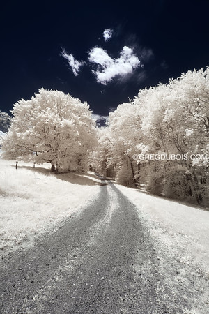 Dirt Road Through White Forest in Andover Massachusetts