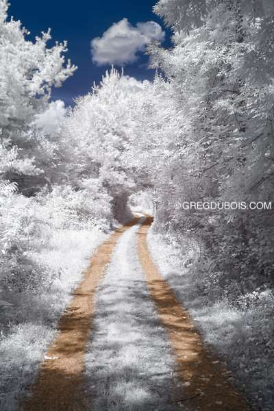 White Tree Tunnel and Winding Dirt Road in Boxford Massachusetts