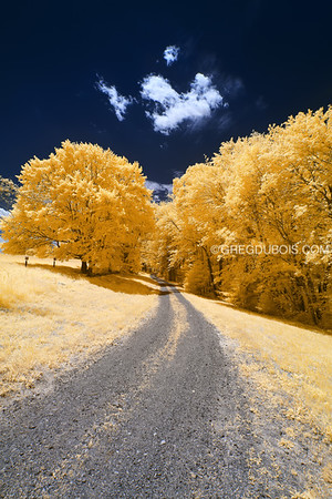 Dirt Road through Golden Forest in Andover Massachusetts