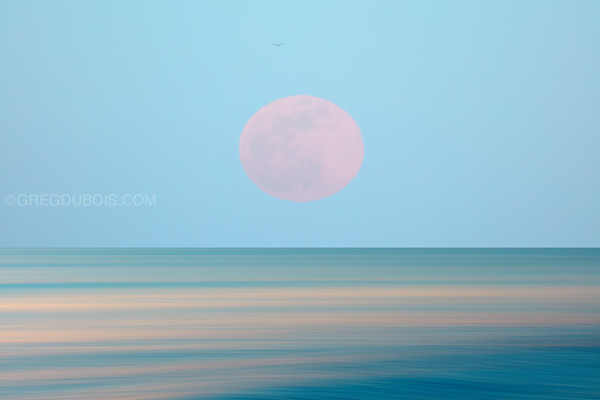Pink Supermoon over Winthrop Beach with Pan Motion