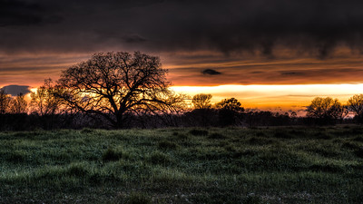Lone Oak at Stormy Sunset