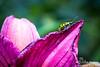 LadyBug Lilly