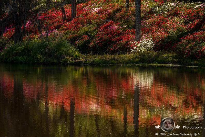 Reflecting Azalea Hill