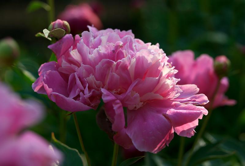 Flower gardens, West Rutland, Vermont